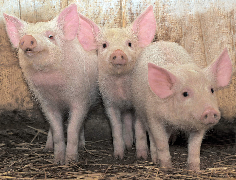 Bacon Marketing - Bringing the sizzle to your marketing